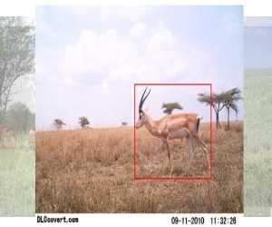 Identifying animals with AI | Camera trap analysis | AI for social good